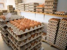 Ablage von Eier